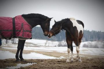 Gyvenimas ant balno – nuo kamanų iki nuosavo žirgyno