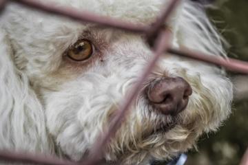 Emigranto neviltis: prieš išvykdamas iš Lietuvos pajūrio gyventojas pasmaugė savo šunis