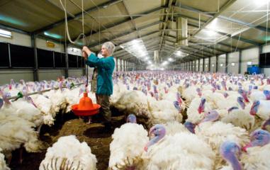 Paukščių gripas plinta – vėl nustatyti nauji jo židiniai