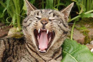 Ar katė jus suvalgytų, jei mirtumėte? O gal katės nemėgsta žmogienos?