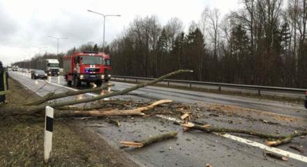 Ugniagesiai 29 kartus vyko šalinti vėjo išverstų medžių