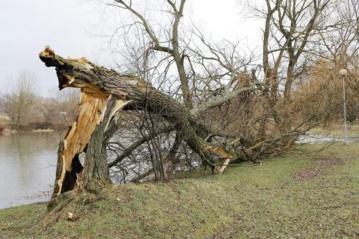 Smarkus vėjas sutrikė elektros tiekimą, laužė medžių šakas