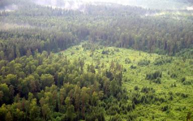 Miškų Lietuvoje daugėja