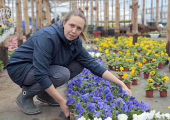 Karantinas trukdo gėlininkams parduoti gražiąsias našlaites