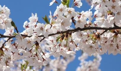 Orai: pavasario ir vasaros sandūrą lydės saulė bei šiluma