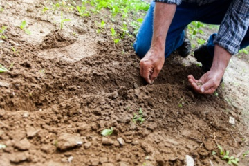 Prasidėjo sodo darbų sezonas: 3 pavojai, tykantys neatsargių sodininkų