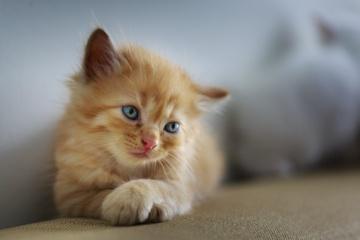 Ignalinos rajone išgelbėtas kačiukas