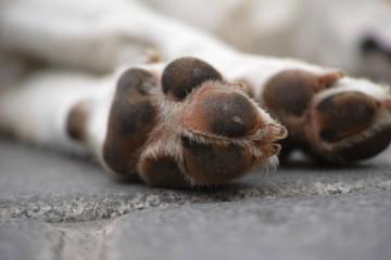 Pakraupo net policija: Jonavos rajone žiauriai nukankintas šuo