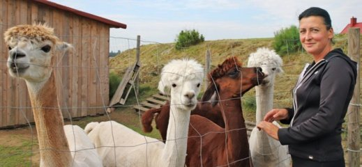 Greta Mikoliškio ganosi egzotiškosios alpakos