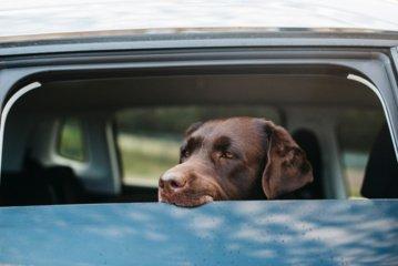 Šuo automobilyje: kada vasaros kelionės augintiniui kelia pavojų