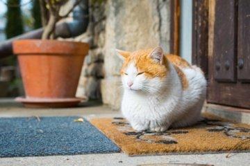 Kodėl katės šlapinasi namuose ir ką su tuo daryti?