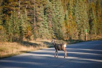 Po vairuotojų ratais – stirnos, gandrai ir naminiai gyvūnai