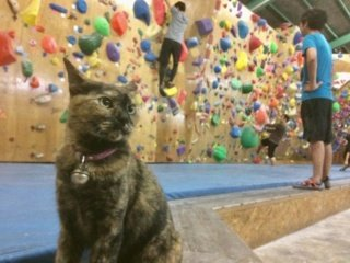 """Katė, """"dirbanti"""" laipiojimo salėje, pati įveikė iššūkį"""