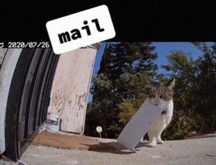 Kleptomanė katė  apvaginėja kaimynus