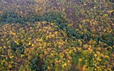 Vyriausybė imasi didinti miškingumą: perduota 3,5 tūkst. hektarų žemės miškams įveisti