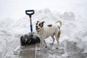 Vaistininkai įspėja: nesistenkite nukasti viso sniego iškart