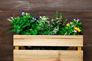 Šiltnamis balkone: į ką atkreipti dėmesį ir ką auginti?
