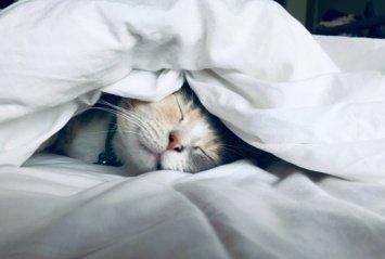 Tikro atsipalaidavimo vertėtų pasimokyti iš kačių: 7 murkiančios terapijos žingsniai