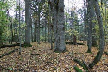 """""""Sengirės fondas"""" už žmonių skirtą GPM paramą saugomų miškų plotą papildė vertingu sklypu Prienų rajone"""