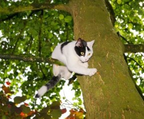 Pivašiūnų ugniagesiai išgelbėjo medyje įstrigusį katiną