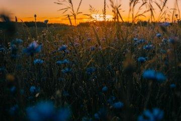 Vasariškų dienų skaičius Lietuvoje auga