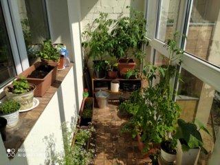 Povo mados – ne vaisiams nokinti. Gerovės balkonas (14)