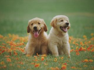 Šunų maistas - pagalbininkas kuriant ryšį su savo šuniu