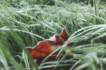Lietus ir žvarbus vėjas dar nesitrauks, naktimis numatomos šalnos
