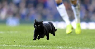 © Everton FC News