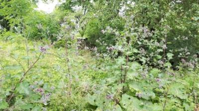 """Jau tik tokios """"gėlės"""" puošia senų sodybų vietas"""
