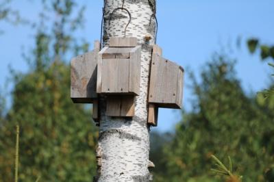 Šikšnosparniams skirti inkilai plynoje kirtavietėje.