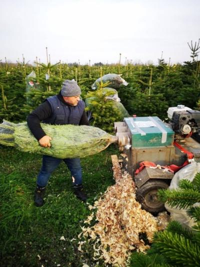 Specialus įtaisas kėnio pagrindą suformuoja taip, kad jį būtų patogu įstatyti į stovą. Taip paruošti medžiai parduodami Vakarų Europos rinkoje.