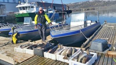 Po sėkmingos žvejybos Norvegijoje. Laimikis – beveik 400 kg menkių.