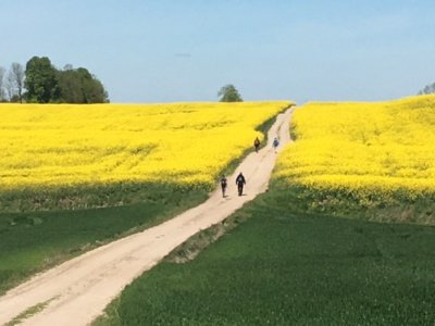 """""""Camino Lituano"""" piligrimą, žygeivį, keliautoją ar tik pavargusį šio pasaulio žmogelį, trokštantį dvasios ramybės, veda gražiais Lietuvos keliais ir takeliais pro ramiai siūbuojančius ir nokinančius duoną javų laukus."""