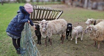 Gabrielė nepraleidžia progos paglostyti aptvare besiganančų avyčių. Aidos GARASTAITĖS nuotr.