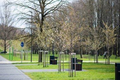 Kultūros ir poilsio parke – Pavasario take – pasodintos Saržento vyšnios –jos sukuria žydinčių sakurų įspūdį.