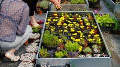 Vilijos sode auga ir augalų, kurių gali rasti tik kolekcionierių gėlynuose. Čia geltonuoja mudrės, gausiai žydi eleborai, net kosmose pabuvojusios tradeskantės ir kt. (Audronio Rutkausko nuotr.)