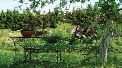 Kai gėlės auga tarp žolių, per didžiausius karščius nenudžiūsta, jų nenuėda kirmėlės ir šliužai. Be to, pasisėja ir visiškai kitokių spalvų žiedų augalų. (Audronio Rutkausko nuotr.)