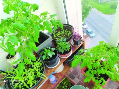Balkone labai trūksta žiedų, todėl tarp daržovių pridėliojau gėlių vazonėlių. (Autorės nuotr.)