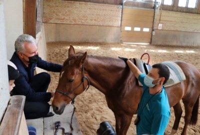 LR prezidentas Gitanas Nausėda, neseniai apsilankęs Kurtuvėnų regioninio parko žirgyne, nustebo sužinojęs, kad hipoterapijos centro Šiauliuose nuo šių metų nebėra. (Roberto Dačkaus nuotr.)